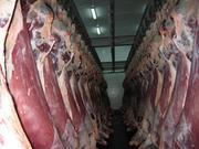 Магнитогорск Постоянная поставка свежего  мяса
