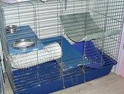 Клетку для хорьков,  шиншил,  кроликов