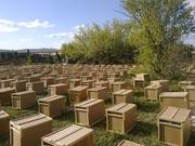 пчелопаекты из краснодара